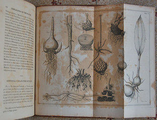 Elements of Botany: or Outlines of the Natural History of Vegetables. Illustrated by Forty Plates.