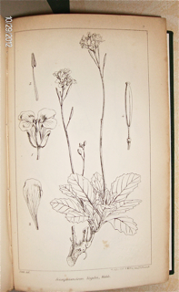 Niger Flora, or, An Enumeration of the Plants of Western Tropical Africa, collected by the late Dr. Theodore Vogel.
