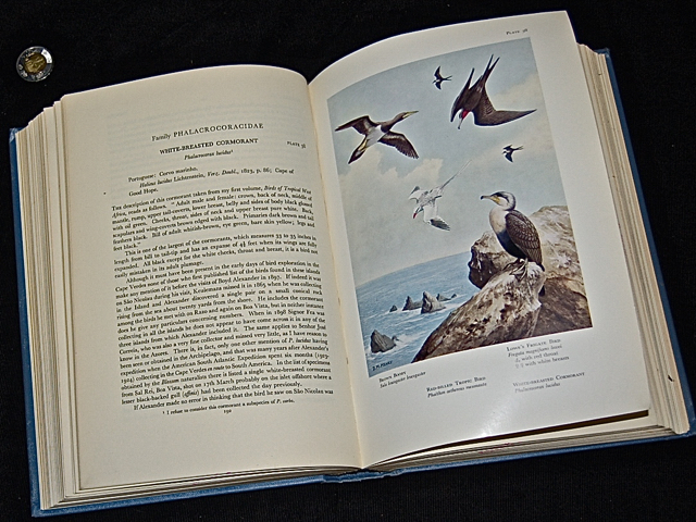 Birds of the Atlantic Islands