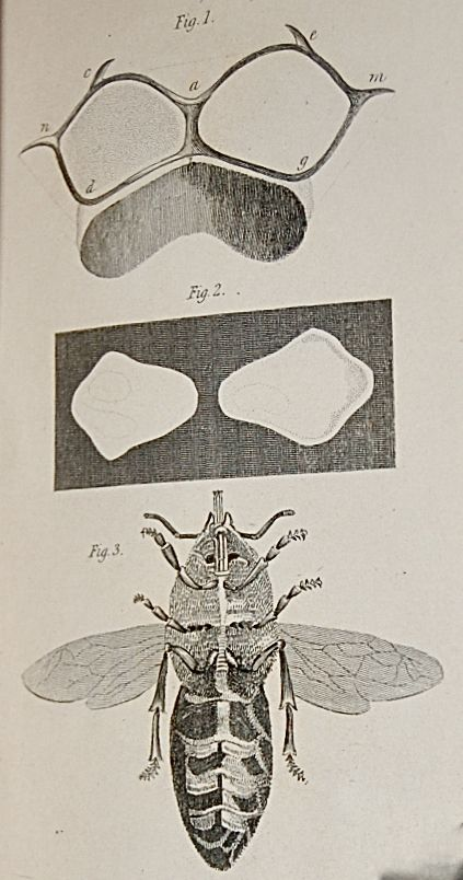 The Natural History of Bees. Comprehending the Uses and Economical Management of the British and the Foreign Honey-Bee; together with the Known Wild Species.